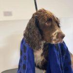 Rolo Testimonila Orchard Dog Grooming Southam Cheltenham
